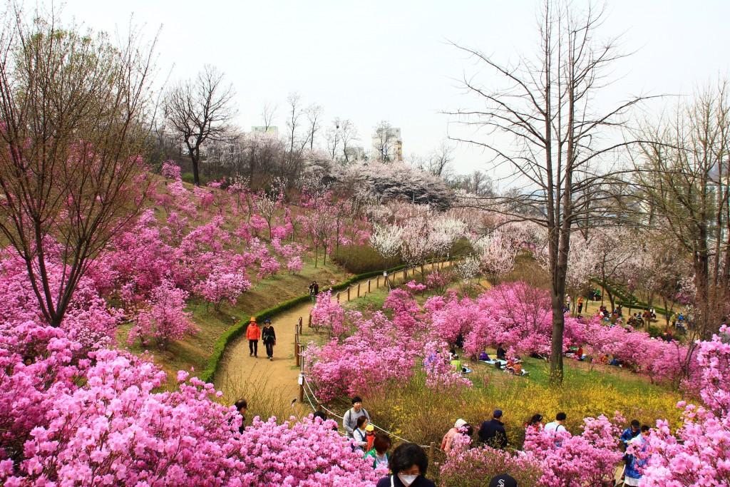 부천원미산진달래축제 , 강남역치맥 019