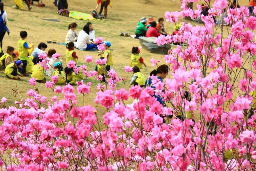 부천원미산진달래축제 , 강남역치맥 073