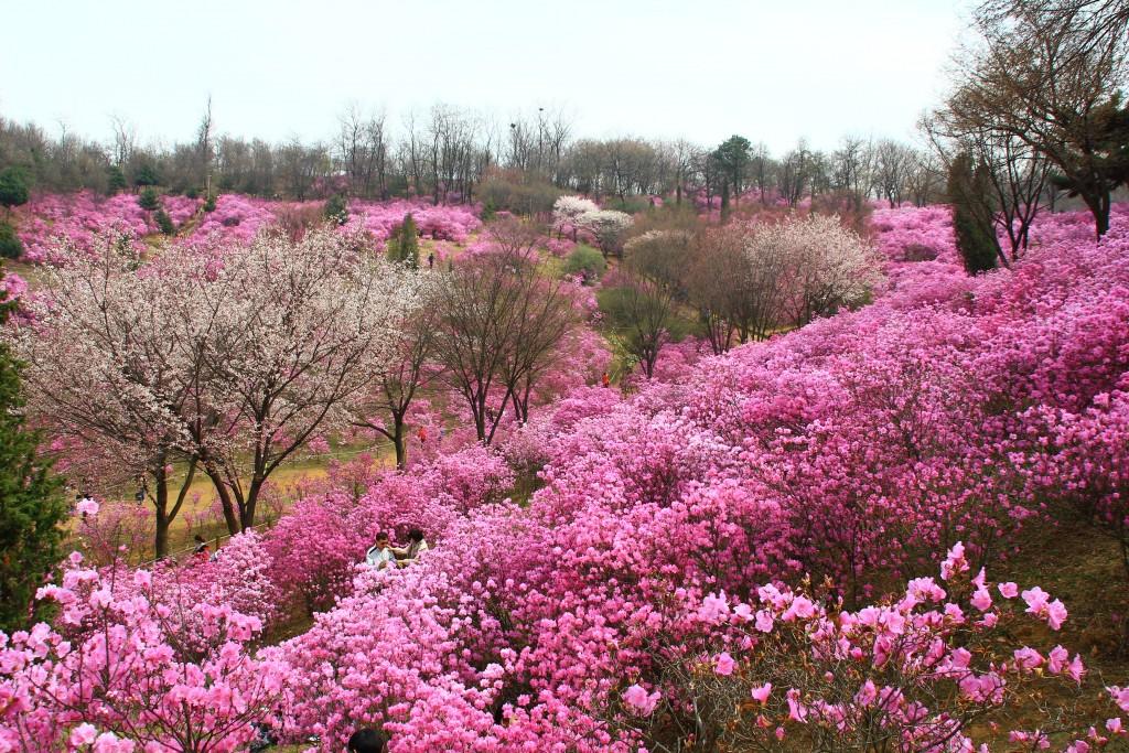 부천원미산진달래축제 , 강남역치맥 104