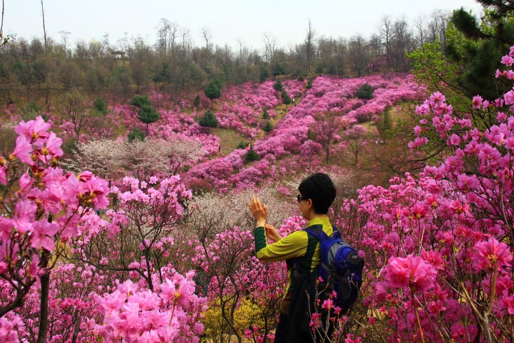 부천원미산진달래축제 , 강남역치맥 112
