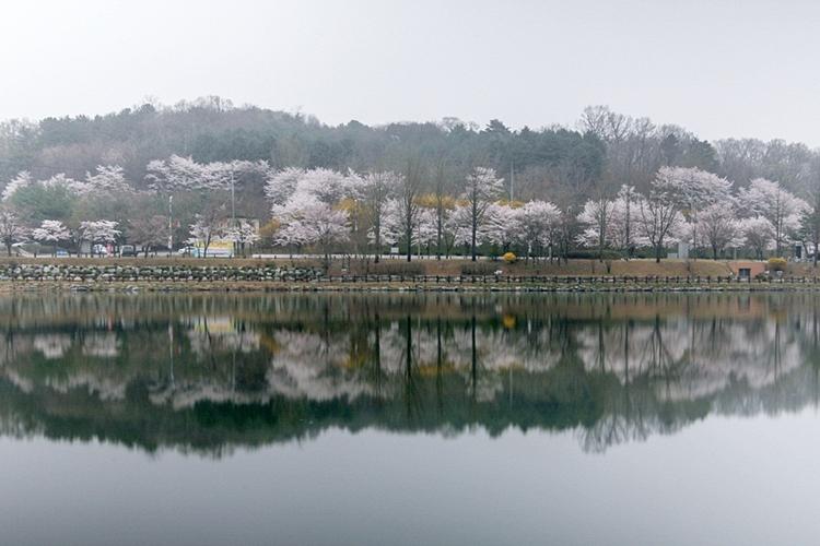 설봉공원벚꽃나들이006