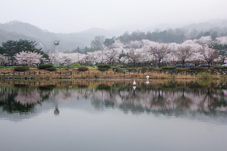 설봉공원벚꽃나들이015