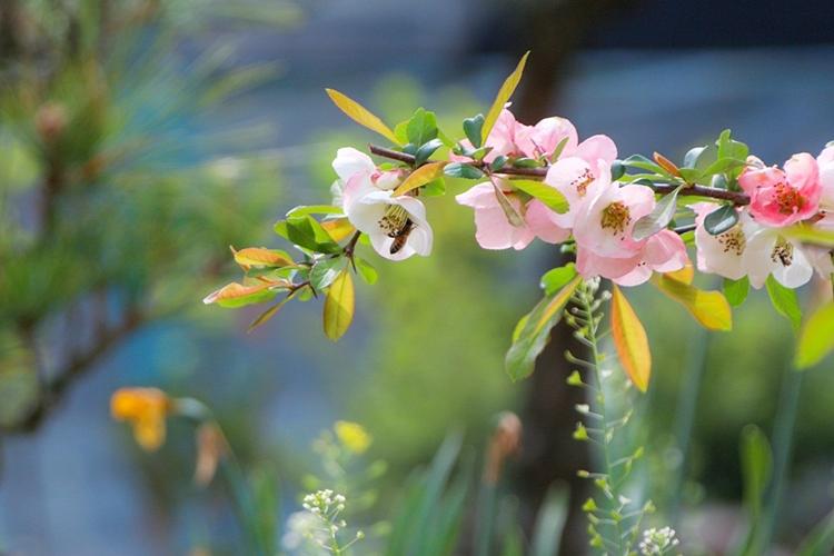 율봄식물원008