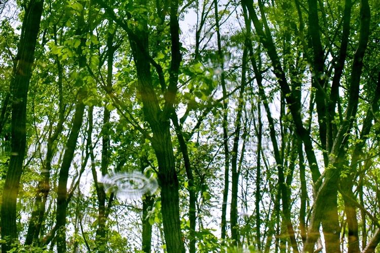 율봄식물원020