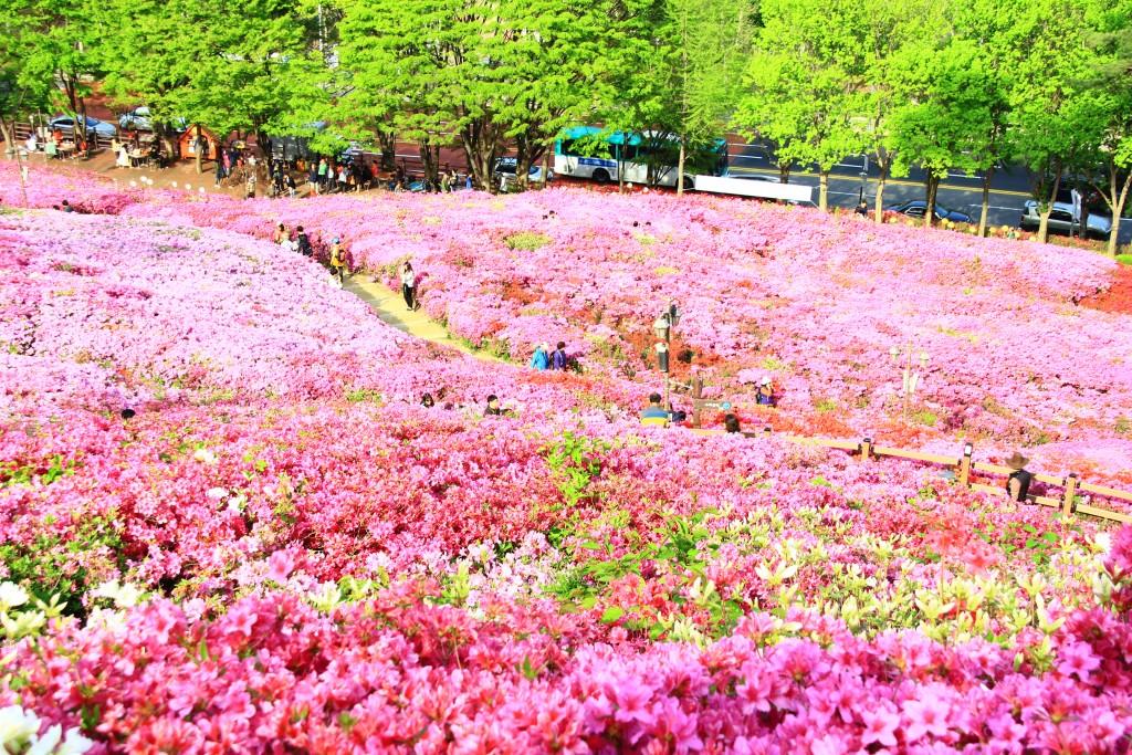 의왕왕송저수지, 군포철쭉동산,시골밥상 253