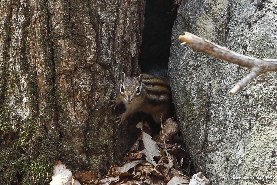 다람쥐 사진