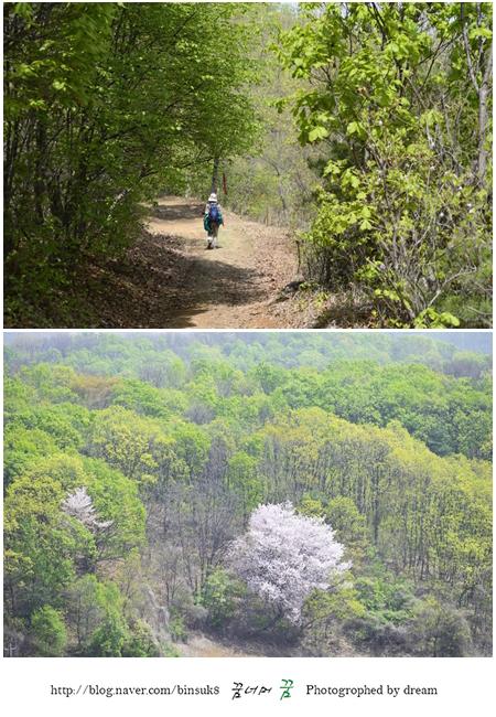 등산객과 넓은 숲