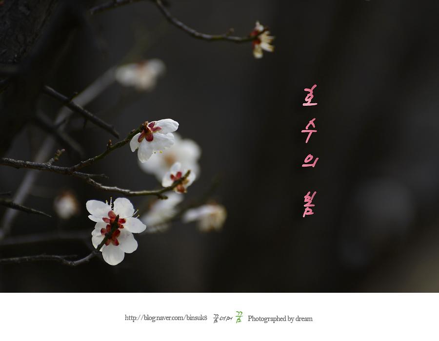 2016.3.22.일산호수공원 봄소식 jpg