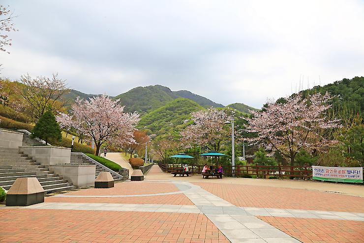 광장과 주위에 만개한 꽃나무들
