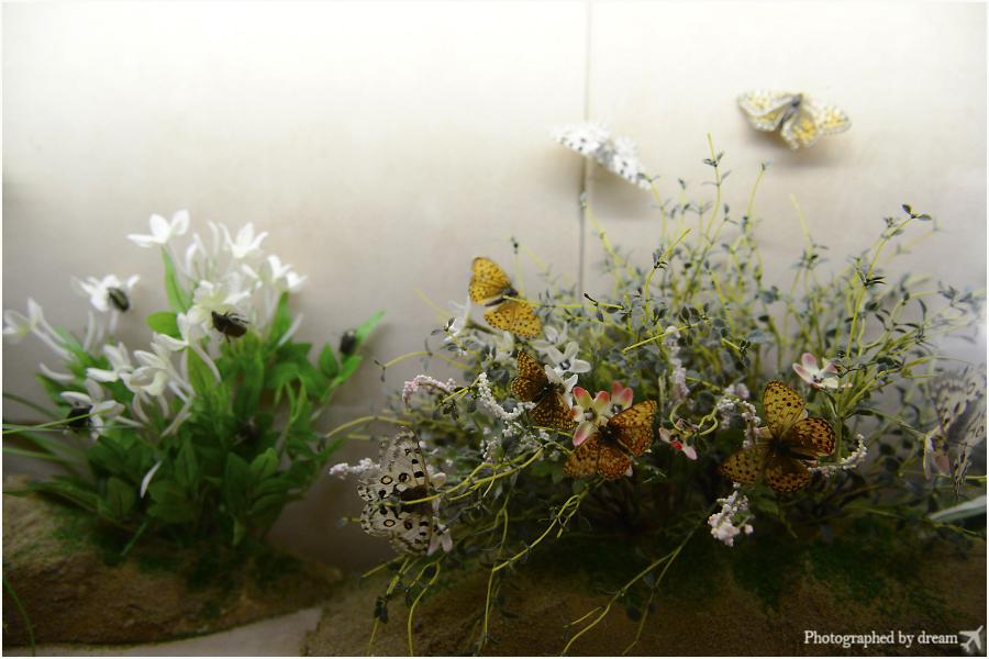 생태관의 나비