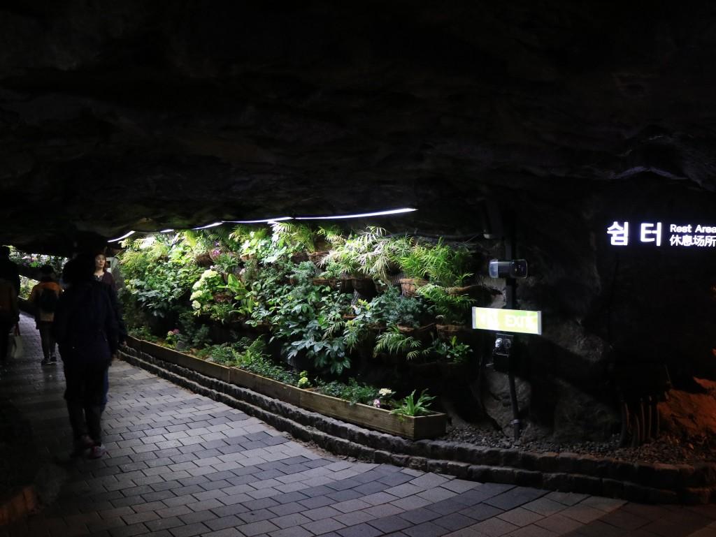 광명동굴,충현박물관, 테크노마트카메라 423