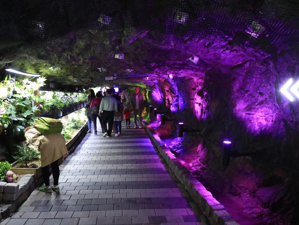 광명동굴,충현박물관, 테크노마트카메라 465