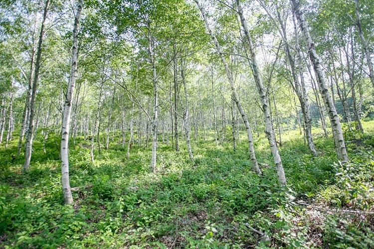 서후리숲016