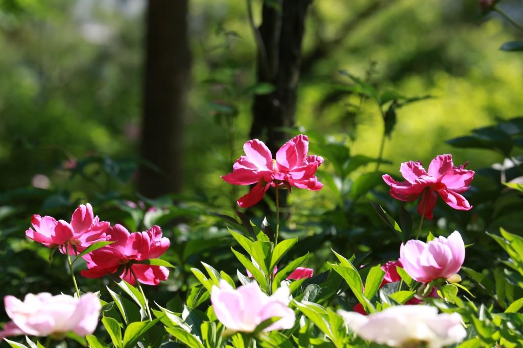 식물원 034