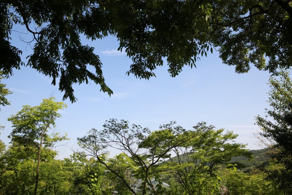 식물원 062