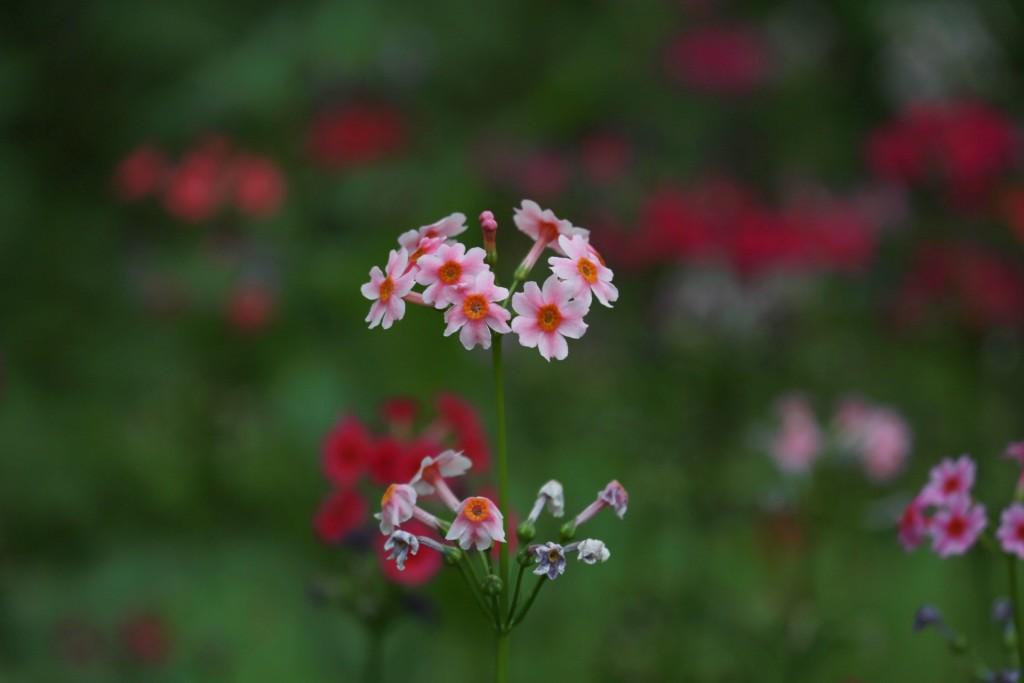 식물원 067