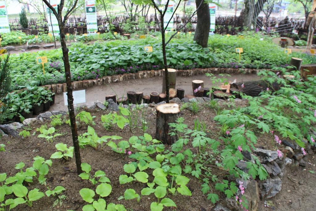양평산나물축제,들꽃수목원,농업박물관,양평군립미술관 213