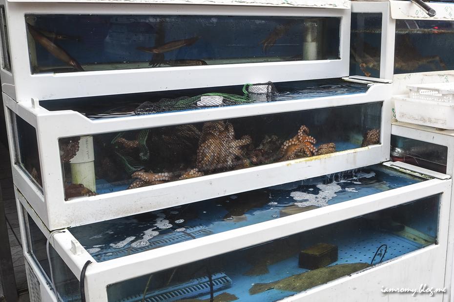 산문어가 가득한 수족관