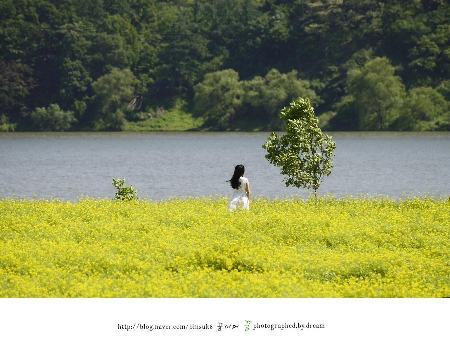 유채꽃 밭에 들어가 있는 여성