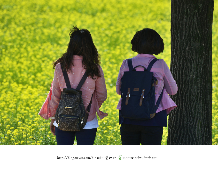 나무 옆에 서서 유채꽃을 바라보는 사람들