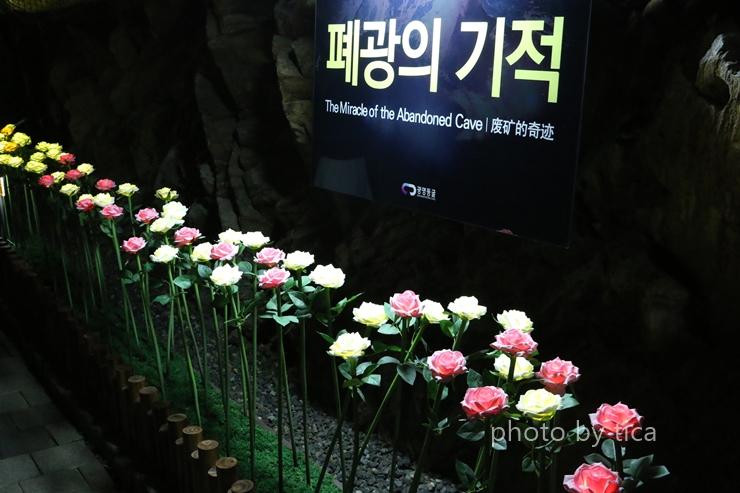 꽃이 늘어서 있는 길