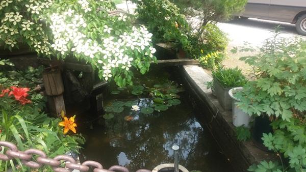 가평참숯오리농원의 연못