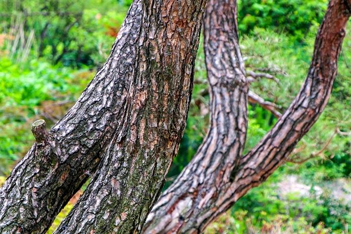 곤지암화담숲011