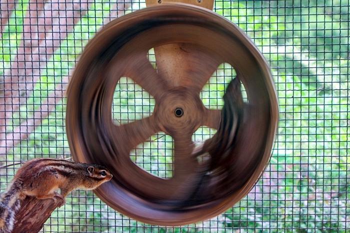 곤지암화담숲018