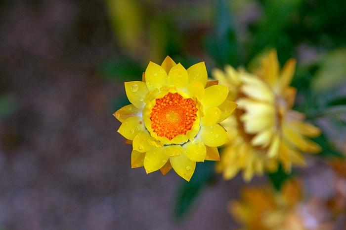 들꽃수목원005