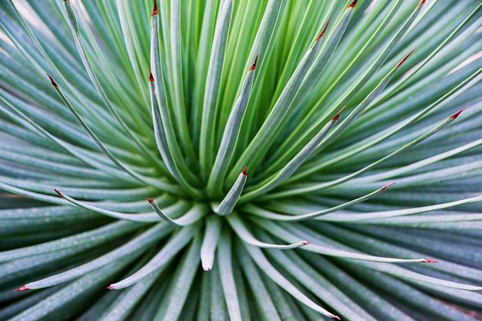 들꽃수목원012