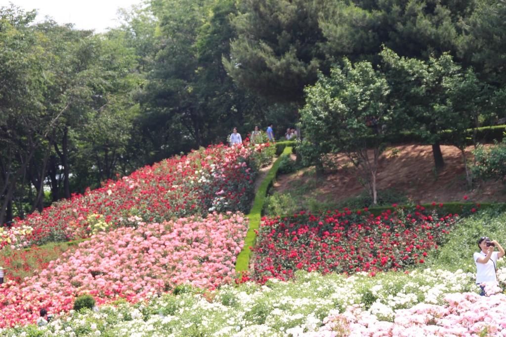 부천100송이장미공원,무릉도원수목원 114