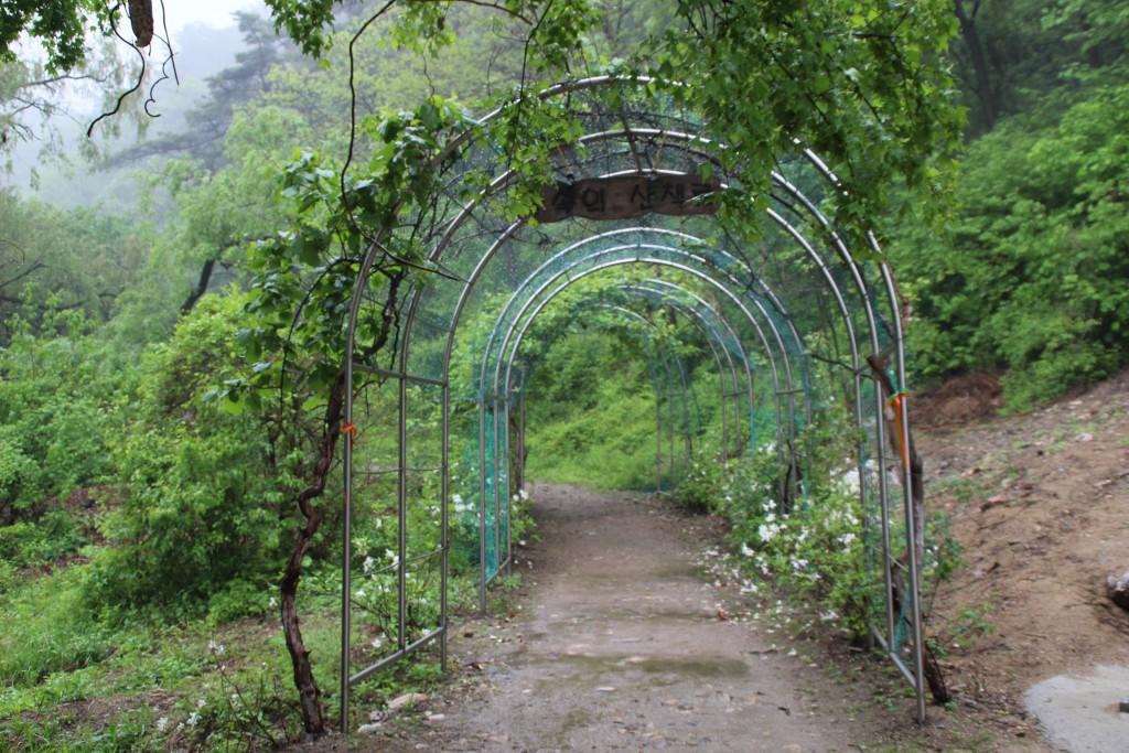양평산나물축제,들꽃수목원,농업박물관,양평군립미술관 149