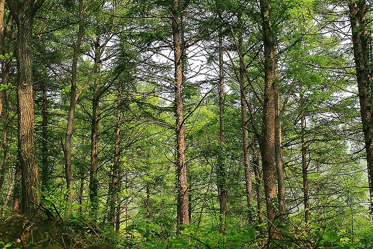 나무들이 자라있는 숲속