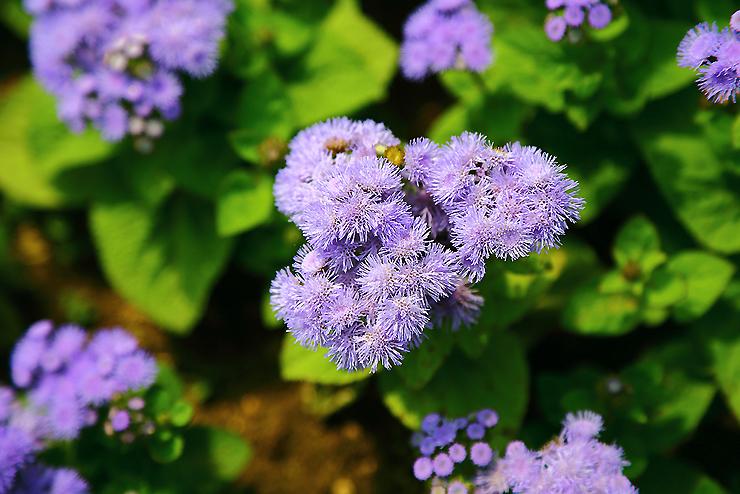 파랗게 핀 꽃