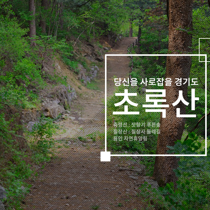 당신을 사로잡을 경기도, 초록산, 축령산 잣향기 푸른숲, 칠장산 칠장사 둘레길, 용인 자연휴양림