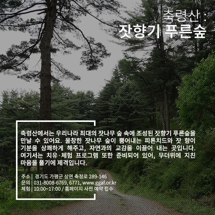 축령산 : 잣향기 푸른 숲 - 축령산에서는 우리나라 최대의 잣나무 숲 속에 조성된 잣향기 푸른숲을 만날 수 있어요. 울창한 잣나무 숲이 뿜어내는 피톤치드와 잣 향이 기분을 상쾌하게 해주고, 자연과의 교감을 이끌어 내는 곳입니다. 여기서는 치유, 체험 프로그램 또한 준비되어 있어, 무더위에 지친 마음을 풀기에 제격입니다. 주소는 경기도 가평군 상면 축정로 289-146, 문의는 031-8008-6769과 6771 혹은 www.ggaf.or.kr로 가능, 10시부터 5시까지 체험이 가능하고 홈페이지에서 사전 예약 접수를 해야합니다.