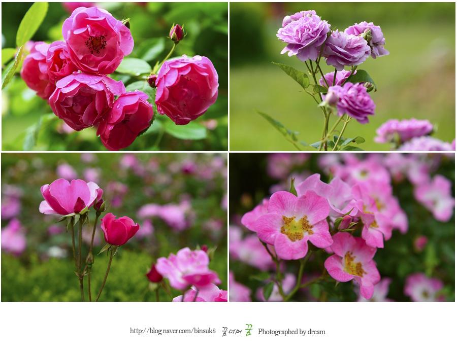 다양한 색과 모양의 장미들