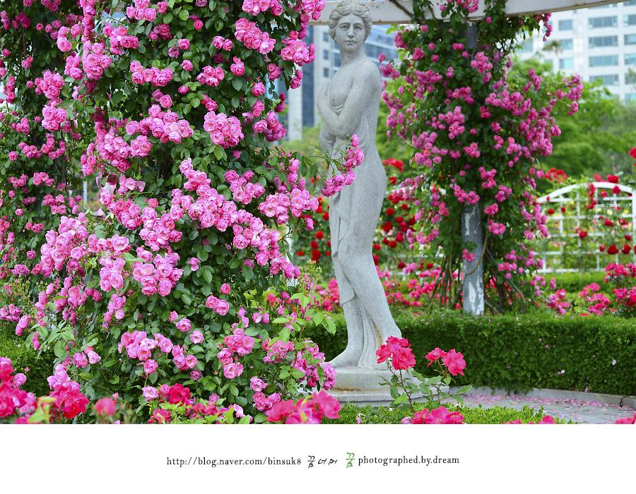 장미 사이의 비너스 동상
