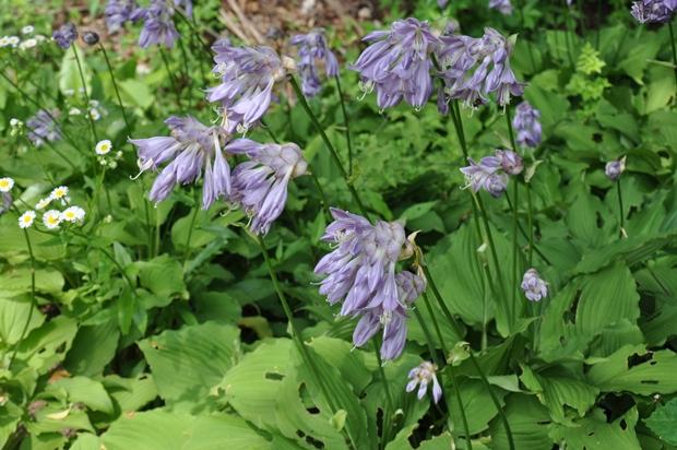 가득 핀 꽃들