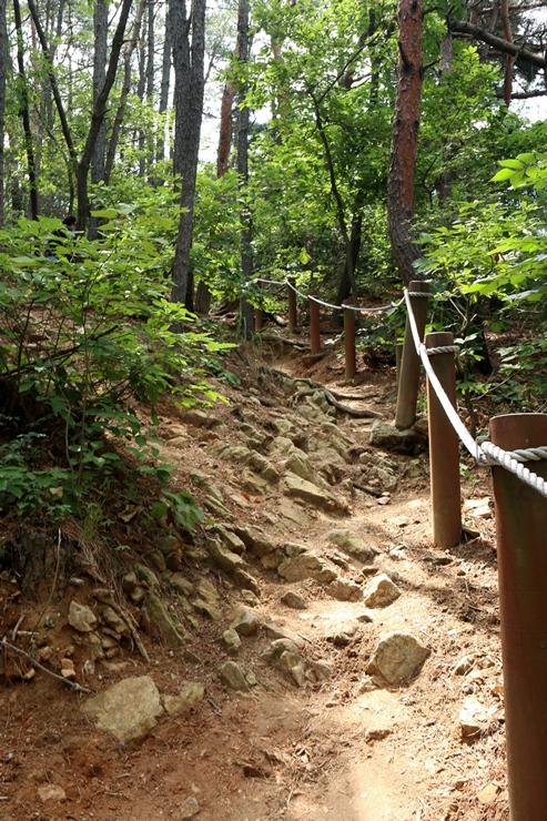 법화산 나무와 계단 사진