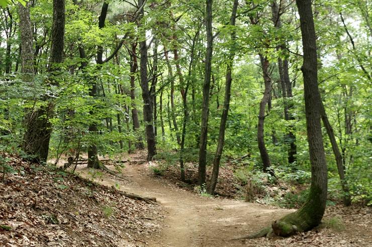 법화산 등산로의 나무들 사진