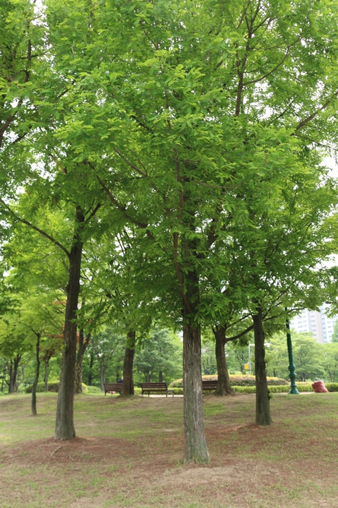 효원공원의 나무들