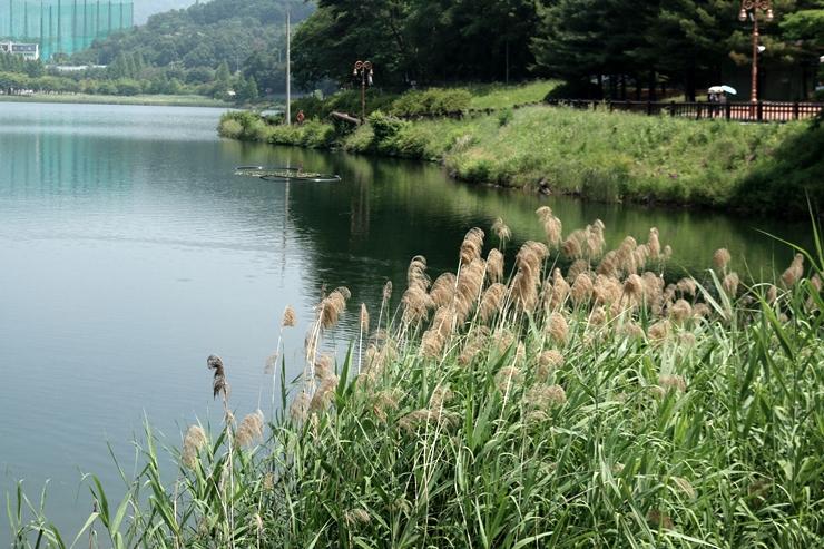강가 사진