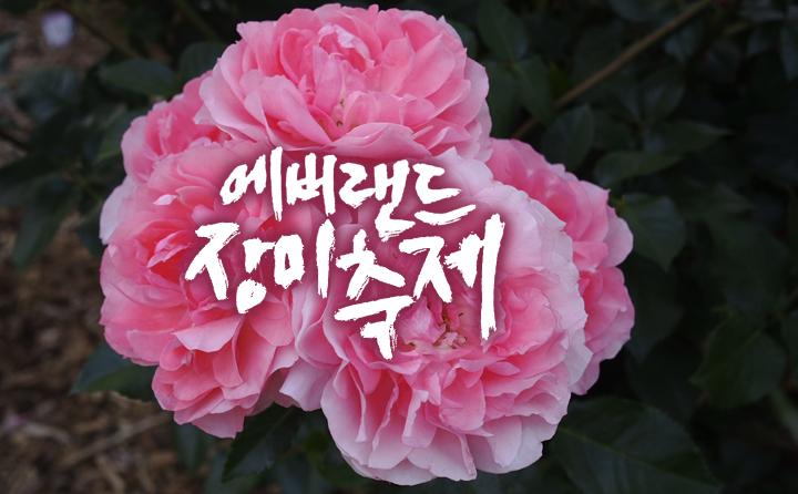 경기도 용인 추천여행 – 마음속의 경기도 111. 에버랜드 장미원