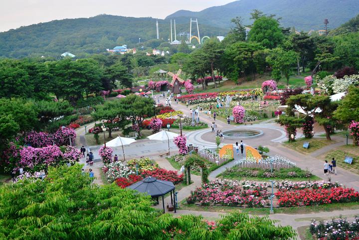 장미원 축제장