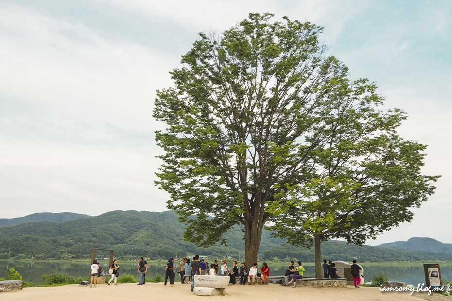 느티나무 아래에서 휴식을 취하는 사람들