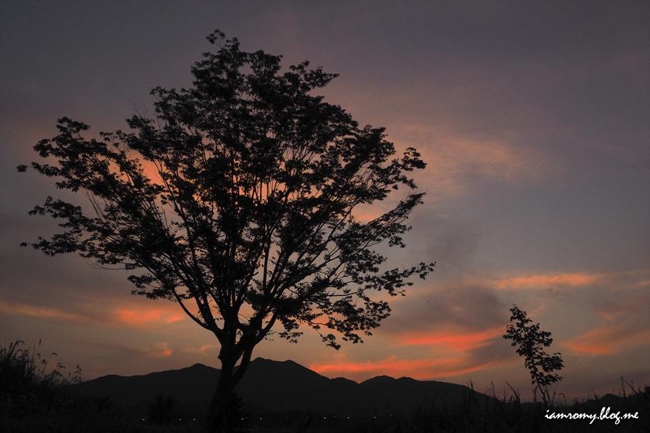 해지는 배경의 나무