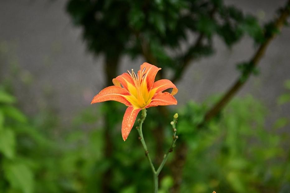 봉선사연꽃8