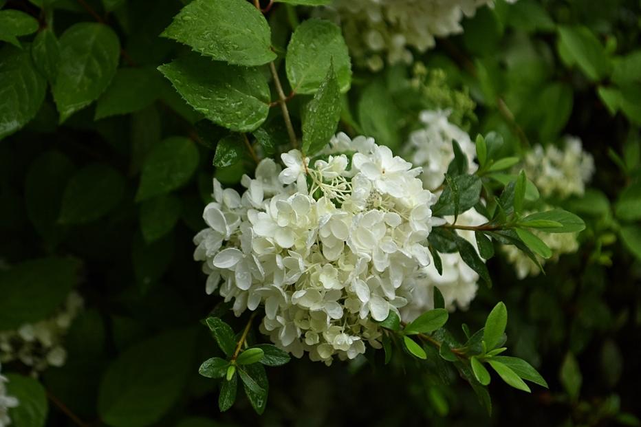 봉선사연꽃9