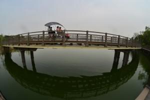 호수 위 레일